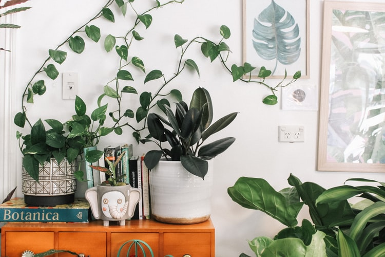 Five Tips to Make Your Home Sustainable
